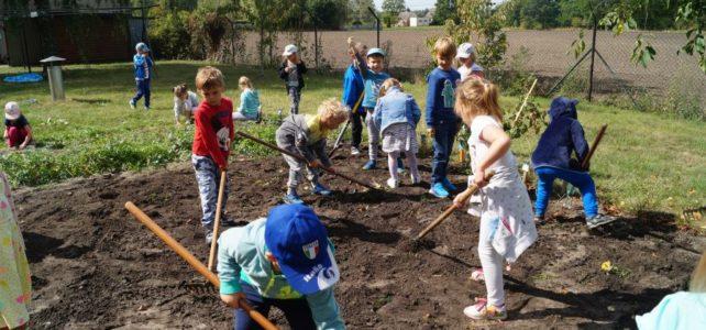 """Metoda projektu- """"Warzywny ogródek przedszkolny""""."""